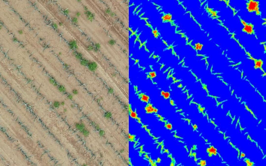 Définition de mauvaises herbes dans la production de poireaux - RGB
