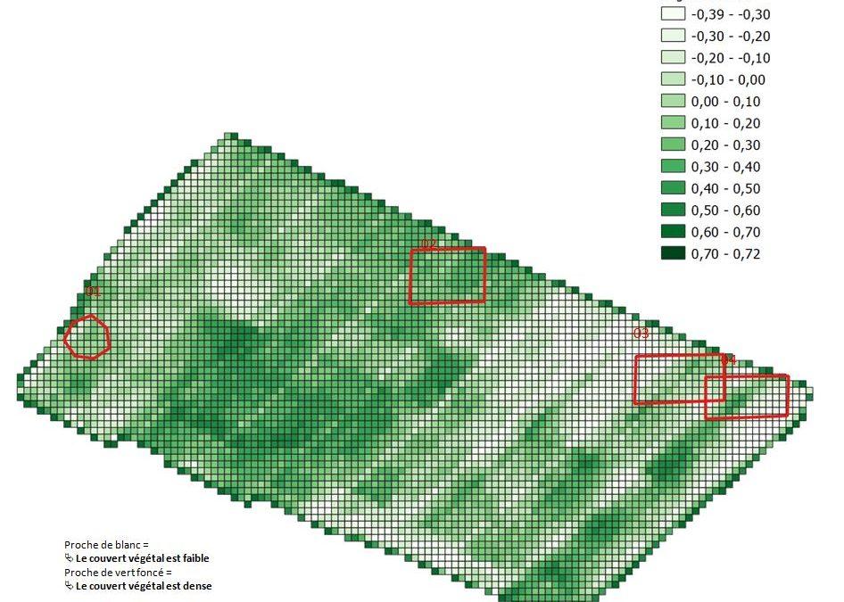 Densité de végétation en oignons - NDVI - multispectrale